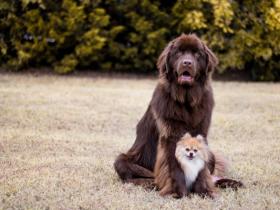 21张可爱狗狗的照片 呆萌又可爱