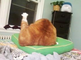 16只让人忍不住笑出来的猫咪 搞笑界里的天才