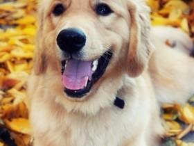 狗狗向你微笑的10张照片 还有励志的名言警句