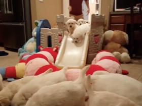 养一群小狗崽是一种什么样的感觉 数清楚几只狗了吗