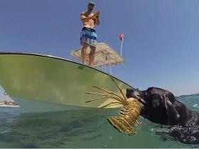 男子为测试宠物狗会不会游泳 自己却滑入水中溺亡