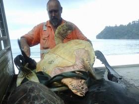 男子不忍乌龟成为人们的盘中餐 购买后放生到大海