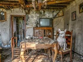 在狗狗的有生之年 带她去欧洲一些被遗弃的地方探险(20张)