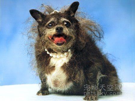 世界上最丑陋的9只狗 丑也是一种美