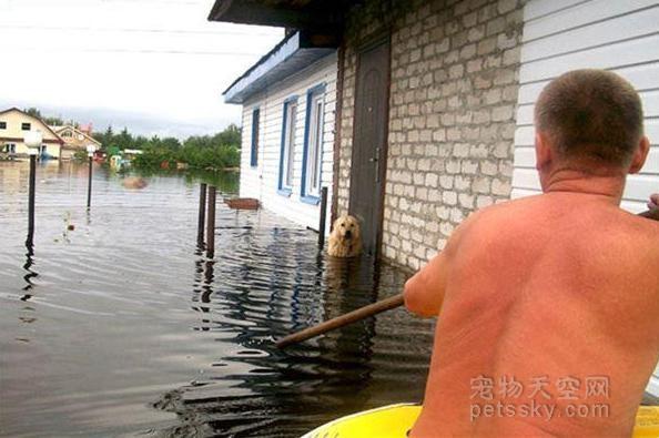洪灾中丢失爱犬 回家后却在水中发现一颗颤抖的狗头