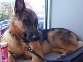 狗狗失去一只耳朵的故事 满满的全是爱