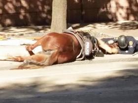 骑警的马被车撞倒后 警员的举动感动了很多人
