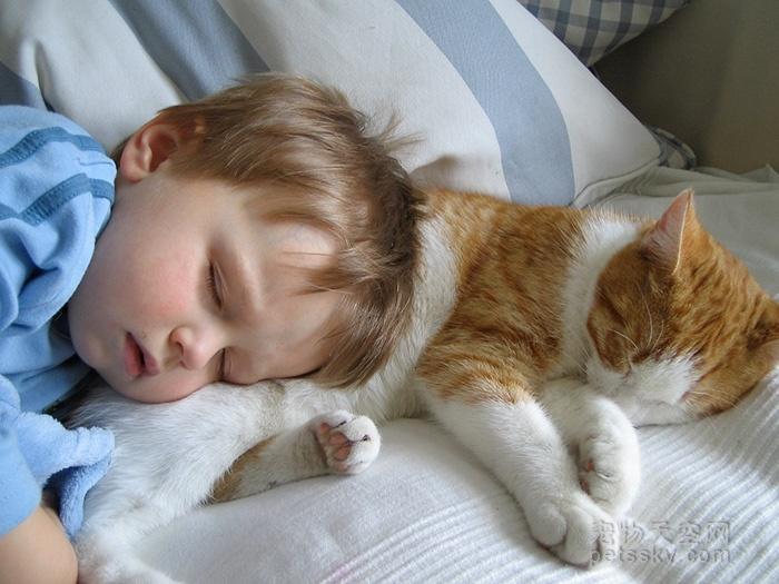 宠物可以和人一块睡吗?