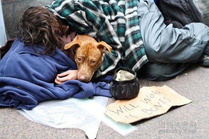 辟谣:我家宠物吃非常贵的宠粮,住得也不错,它很幸福!