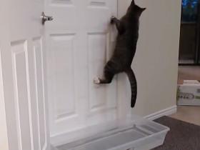 喜欢开门的猫咪