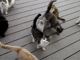"""每天家门口都有一群示威的猫咪 房主已经骑""""虎""""难下了"""