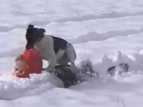 狗狗在冬天里的一些爆笑视频 看完心情瞬间好很多