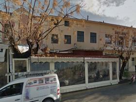 街道上的流浪狗越来越多 咖啡厅让它们晚上在店里过夜