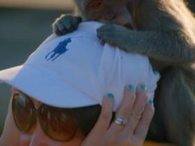 被猴子偷走手机 BBC主持人巧妙地用两颗蛋才讨回来