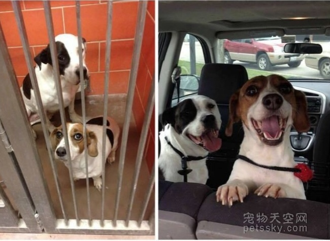 领养的狗狗会和自己亲吗?领养宠物是一种什么体验