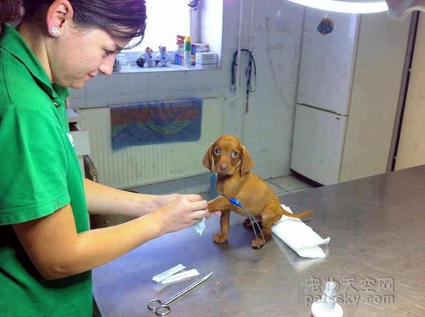 在北上广深开一家比较有权威性的动物医院,需要注意什么?