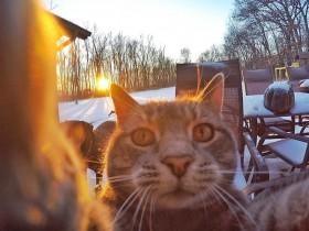 猫咪也玩起了自拍 拍出来的照片还挺不错