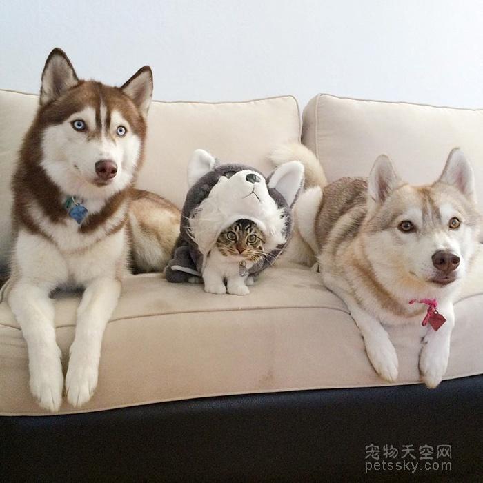 为什么现在的人热衷于养宠物?什么宠物最受欢迎?
