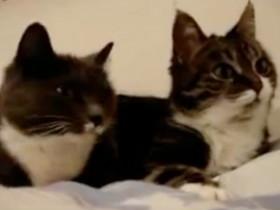猫咪Bum有一对斗鸡眼 忧郁的小眼神惹众多网友心疼