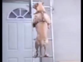 2015年各种动物的搞笑视频合集 轻松一刻
