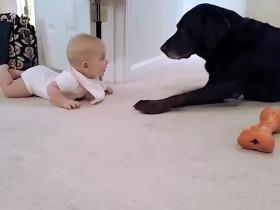 看到小主人爬过来 狗狗立马给他一个奖励
