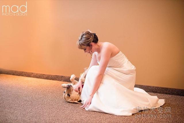 狗狗出现在新娘上的婚礼 原来背后还有别的原因