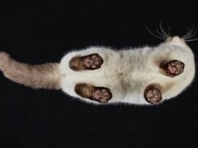 换一个角度看猫咪 它们还是非常可爱(22张)