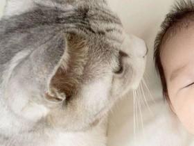 网友家里的猫咪诡异的走路姿势 旁边的猫咪直接吓傻了