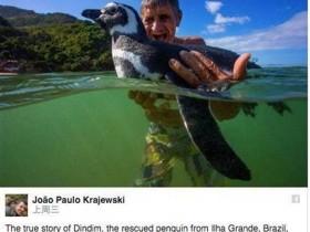 真相逆转!小企鹅根本没有每年游8000公里找恩人