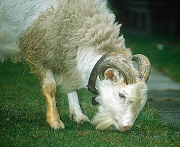 属羊2019年运势及运程 属羊人2019年全年运势