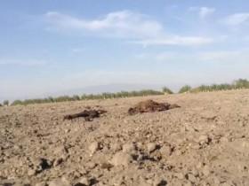 狗狗在同伴的尸体旁守了两个月 砂石的温度达到40度也不愿离开