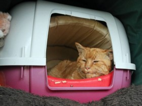 英国教堂墓地死了一只猫 成百上千人表示哀悼之情