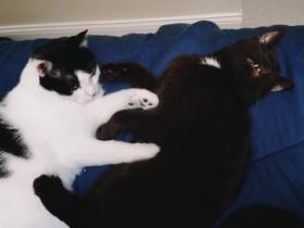 歪嘴缺眼的猫咪没有人肯领养 还好遇到了一家好心人