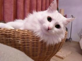 救了一只邋遢的流浪猫咪 一年后这只猫咪的变化惊人