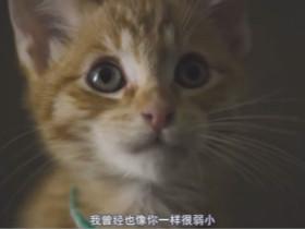 一个猫粮的广告 小心别被小猫咪萌坏