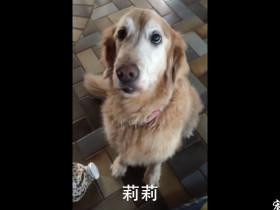 主人抛弃了身长巨大肿瘤的金毛,被控告危害动物生命而判刑