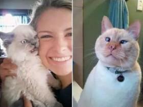 分享八张搞笑的猫咪照片 祝大家愚人节快乐