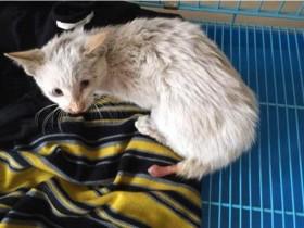 小奶猫被人从楼上扔了下来 好心的女士送它到医院救治