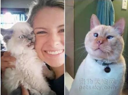 分享八张搞笑的猫咪照片