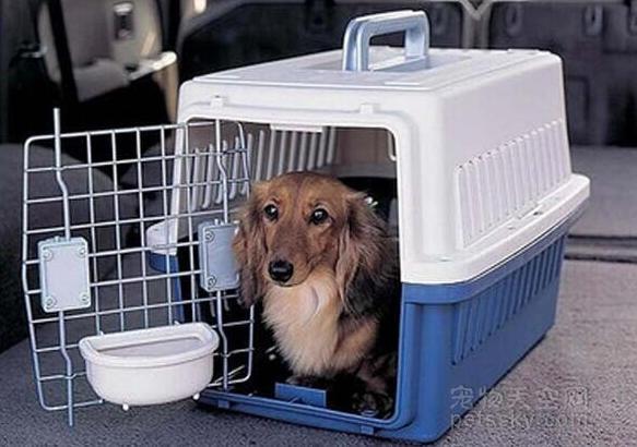 铲屎官的一个头疼的问题:过年回家,宠物该怎么办?