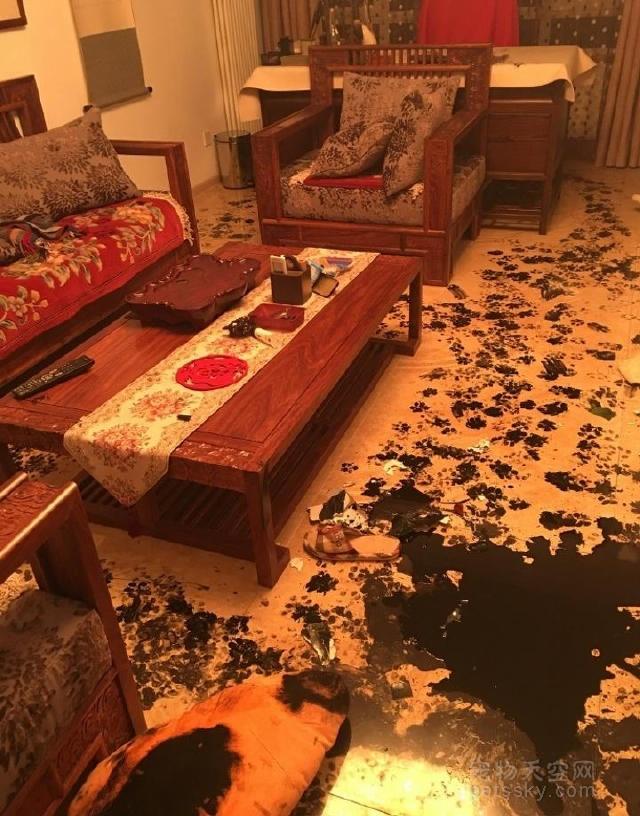当铲屎官不在家的时候,狗狗在家中会做的四件事情!