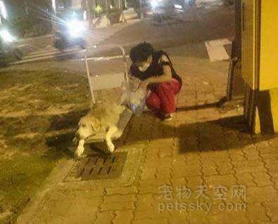 当狗狗老到不能走路的时候 你愿意带着它们出去散步吗