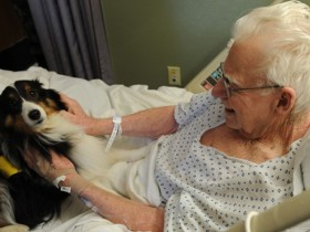 加拿大医院允许重病患者的宠物探望主人 非常人性化