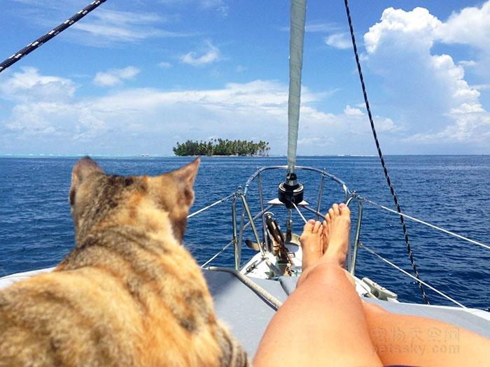 旅游可以带宠物吗,带着宠物适合去哪旅行?