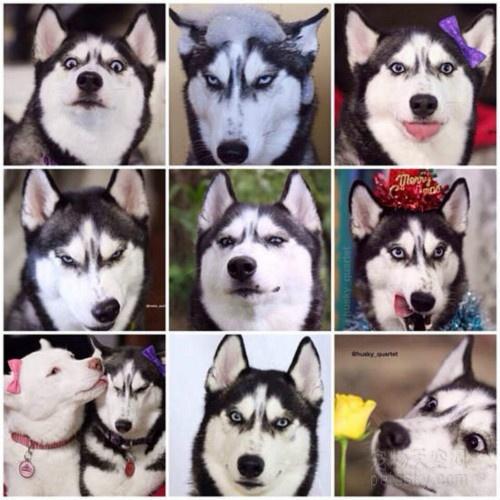 如果让你养狗,你会养什么品种的狗?