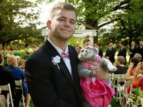 毕业舞会上没有女伴怎么办 男子把家里的猫咪带去当舞伴