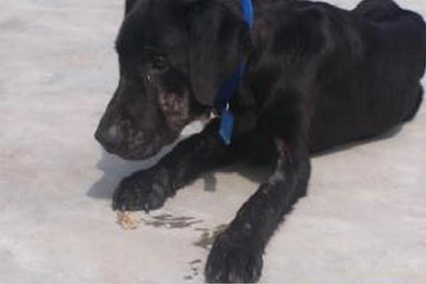 澳洲小哥捡了一只流浪狗 12年间小狗竟为他赚了100万美金