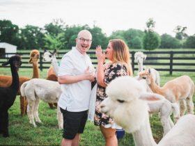美国男子选特殊地方来求婚 羊驼实力卖萌和抢镜