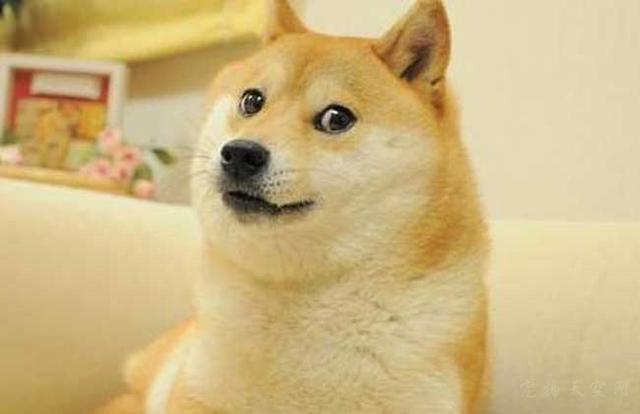 每次洗澡时,柴柴还没有入水,就在空中自动开始狗刨