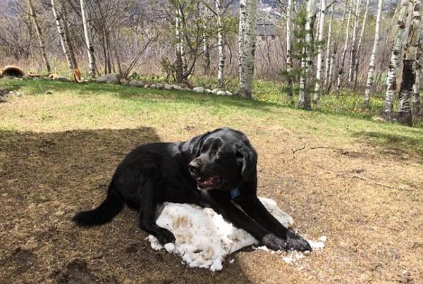 在冬天养狗,有哪些事情不能对狗狗做?